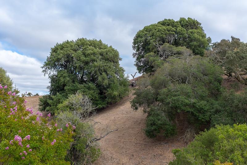 Westside Petaluma Landscape