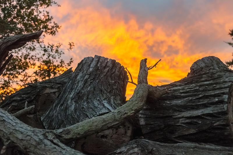 Sunrise over wood