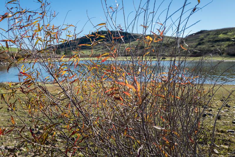 Through the weeds.  Nicasio reservoir. Nicasio, Ca.