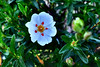 Advanced filter fun...cistus