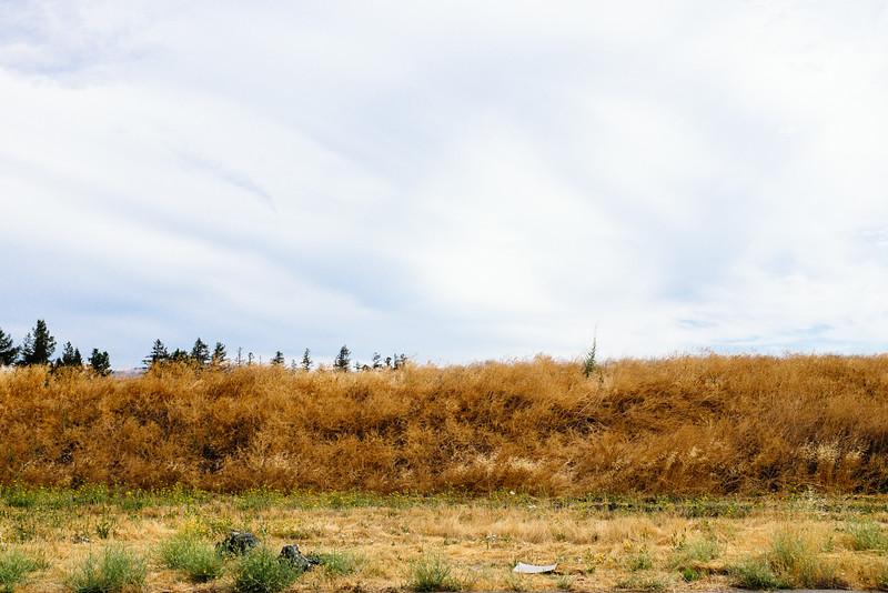Petaluma summer field 2