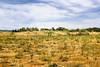 Petaluma summer field