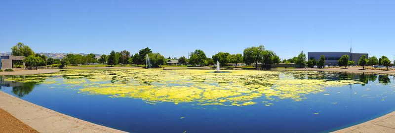 Lucchesi Park Lake Algae