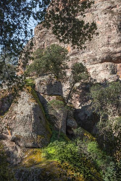 Bear Gulch Trail