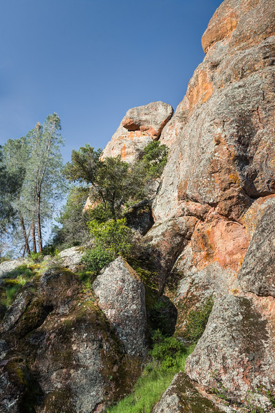 Orange Rocks and Green Trees