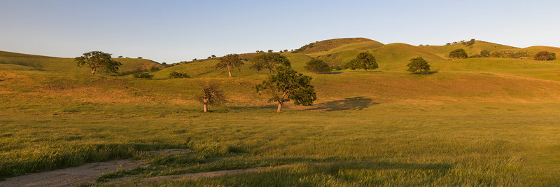 Last Rays of Sun on Rolling Hills