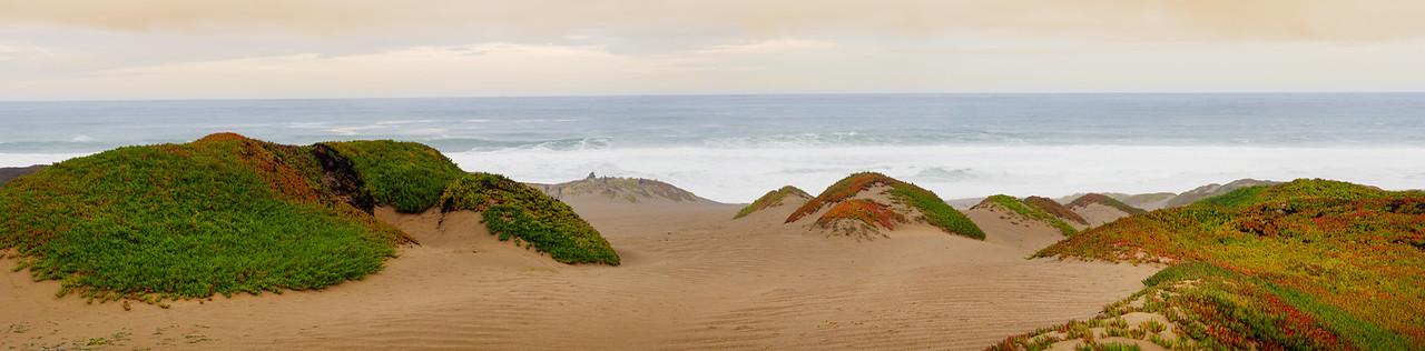 Succulent Dunes