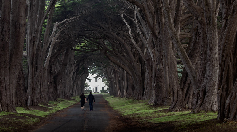 Tunnel Of Trees Love