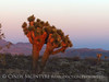 Sunset, Joshua Trees, Rainbow Basin Natural Area, Barstow CA (18)