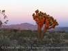 Sunset, Joshua Trees, Rainbow Basin Natural Area, Barstow CA (23)