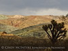 Rainbow Basin Natural Area, Barstow CA (25)