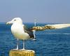 Seagull & Breakwater