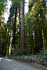 Redwoods National and State Parks, California