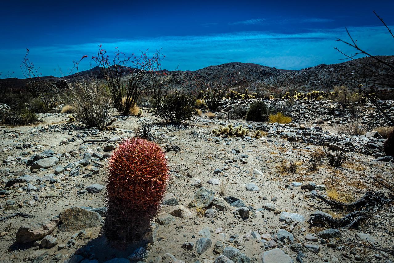 Desert Landscape - near Desert Center, CA