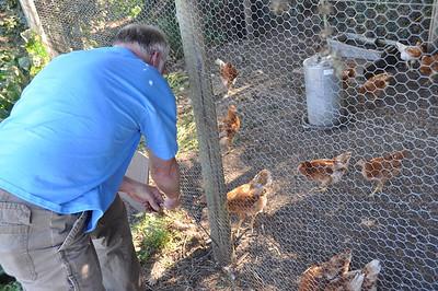 @ Preston: young chickens