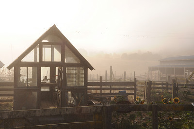 The morning fog @ Cow Track Ranch in Nicasio, CA