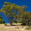 green trees blue sky in Tilden Park