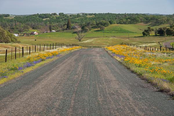 Wildflower Drive
