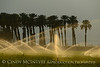 Imperial Valley CA irrigation and palms