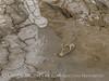 Mudpots at Hudson Ranch Plant I, Niland CA (19)