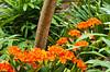 Decorative orange flowers in Balboa Park, San Diego, California, USA.