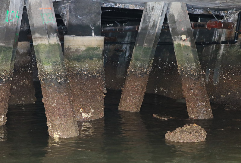Barnicles on the Pier Supports