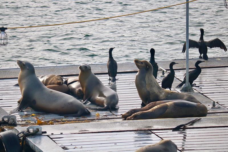 Sea Lions Awaken