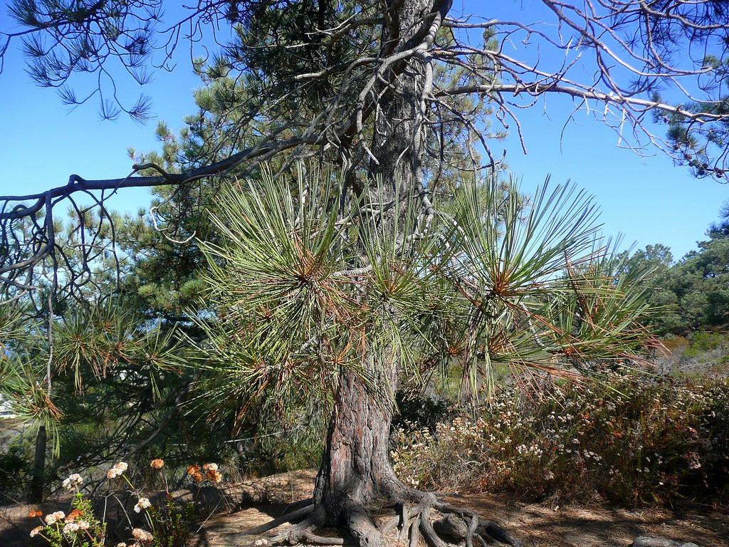 Torrey Pines Reserve, Del Mar