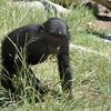 San Diego Zoo, Baby Gorilla