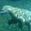 San Diego Zoo, Underwater Polar Bear