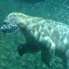San Diego Zoo, Underwater Polar Bear