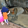 """San Diego Zoo, Young Children """"petting"""" the cheetah"""