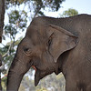 San Diego Zoo, Happy Elephant