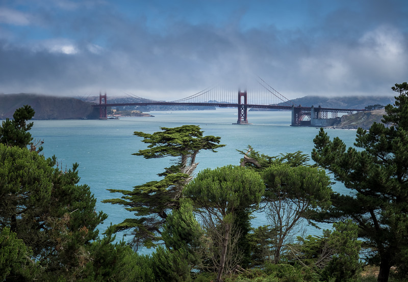 Cypress Trees and Golden Gate Bridge in Fog