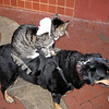 A Dog, A Cat and A Rat (owned by a creative begger)