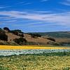 wine country flower farm