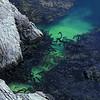 seaweed at China Cove