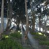 Coit tower park SF
