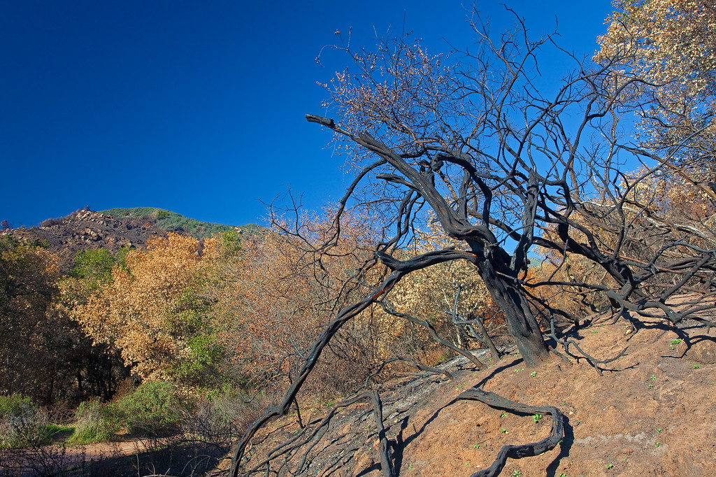 Rattlesnake Canyon trail after fire