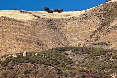 Los Osos trail hillside