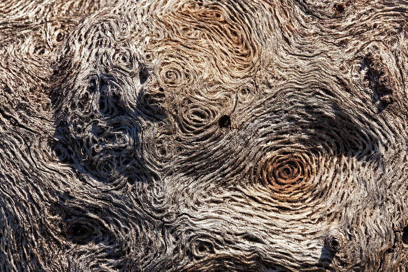 swirly bark