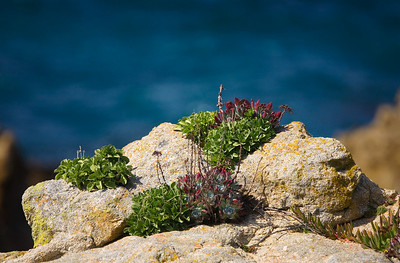 plants on rock