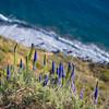 purple flowers on cliff