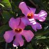 California, Santa Barbara, Winter Blooms