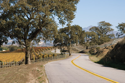 Back road winding through vineyards and pastures in Santa Ynez Valley