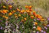 Santa Barbara Botanic Gardens, for plants native to California