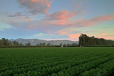 Row crop 2