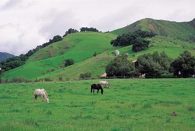 Horses, Wheeler Canyon