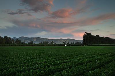 Row crop 1