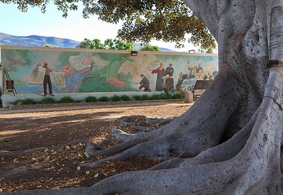 Fig tree with mural